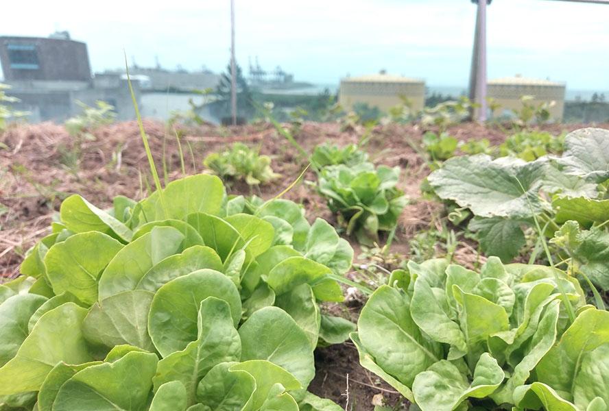 新北市觀海護理之家-菜園