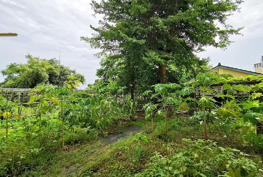 佳佳護理之家-菜園